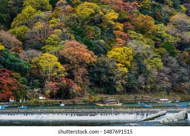 Tourists sightseeing on boats on katsura river, people is sailing in front of colorful autumn trees on mountain ,traditional bamboo dam on river located near Togetsukyo bridge,Arashiyama,Kyoto Japan.