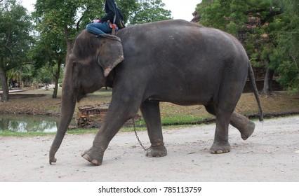 Tourists sitting on elephant back Travel around the ancient city at Ayutthaya, Thailand