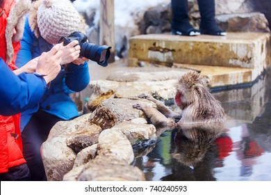 Tourists taking photos of snow monkeys Japanese Macaques bathe in onsen hot springs at Nagano, Japan