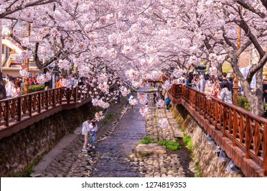 Tourists taking photos of Spring Cherry blossom at Yeojwacheon Stream, Jinhae, South Korea.