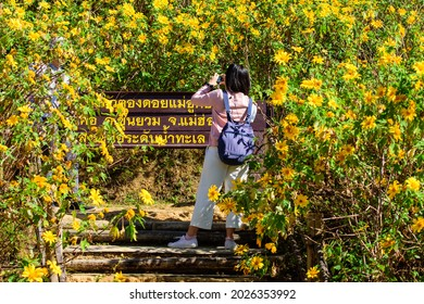 tourists taking pictures at Khun Yuam, Mae Hong Son, Thailand - Nov. 12, 2019 Landscape Yellow flowers on the Mountain, Thung Bua Tong or wild sunflowers on Doi Mae U-Kho