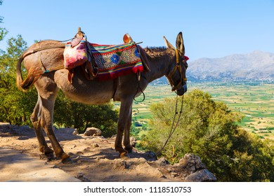 Tourists transported by donkeys to the Mount near to Zeus cave, Crete, Greece