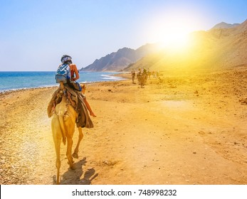 tourists and undefined woman on camels ride with Bedouins along the coast of the golden city famous for its sunsets and Blue Hole. Dahab, Red Sea, Sinai Peninsula, Egypt