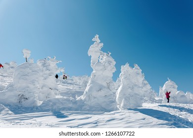 Tourists walking among giant Juhyo (ice trees or snow monsters) on the white snowy mountainside under blue clear sky in Zao hot spring (Onsen) & ski resort on a sunny winter day, in Yamagata, Japan