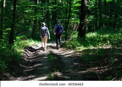 Tourists walking dirt path through a green forest