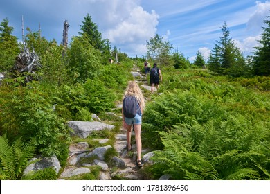 Tourists walking on Dreisesselberg mountain. Border of Germany and Czech Republic. Natural forest regeneration without human intervention in national park Sumava (Bohemian Forest)