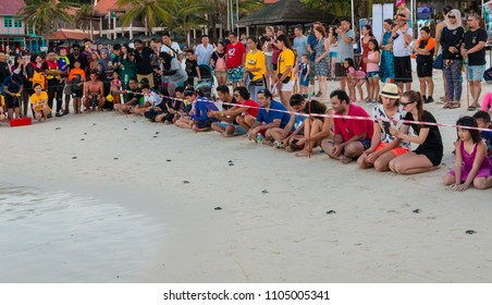 Tourists watching how little cute green sea turtle (Chelonia mydas) hatchlings instinctively head directly into the sea, after they have been released. Taken in April 2017 on Redang Island, Malaysia.