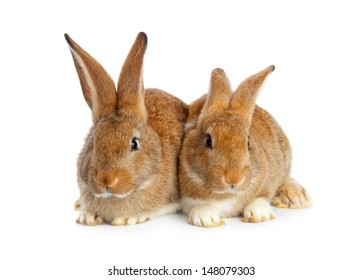 Tow cute rabbits sitting on white background
