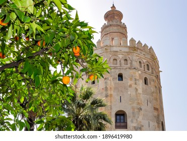Tower of Gold (Torre del Oro) and orange tree in Seville, Spain