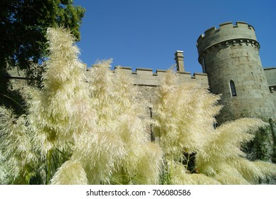 The tower and the walls of the Vorontsov Palace are beside the inflorescences of ornamental golden grass in the palace garden