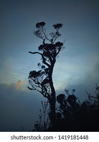 Towering trees in the midle of tropical jungel