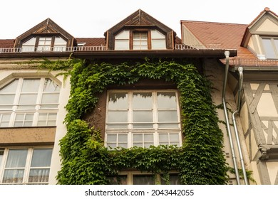 Town house facade with green tendril