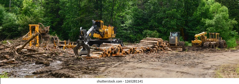 Town of Lake Pleasant, NY - July 9, 2017: Logging site in the Adirondack Mountains NY forest with log skidders, loader, saw, delimber and a pile of logs ready to load and transport.