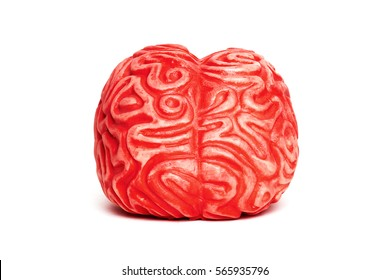 Toy brain isolated on white, front view