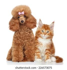 Poodle Cat Images Stock Photos Vectors Shutterstock