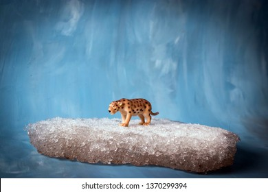 Toy saber tooth tiger on iceberg and blue sky background. Ice age, prehistoric animal on chunk of floating ice. Extinction concept or global warming.