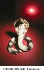 Toy Snake on Red Background