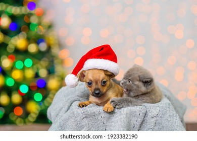 Toy terrier and kitten are sitting in a box against the background of a Christmas tree
