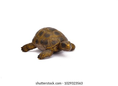 toy turtle on a white background