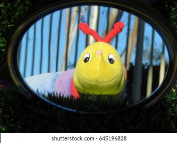Toy Worm Looking in a Mirror