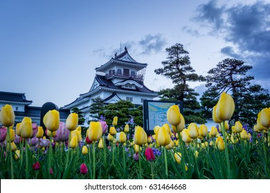 Toyama Castle and tulip foreground at Toyama, Japan