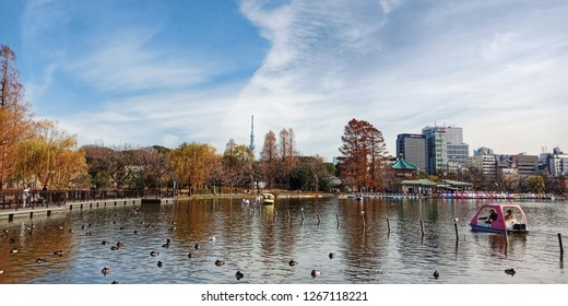 Toyko, Japan - December 25,2018 : View of Tokyo Skytree from Sinobazu Pond, Ueno Park