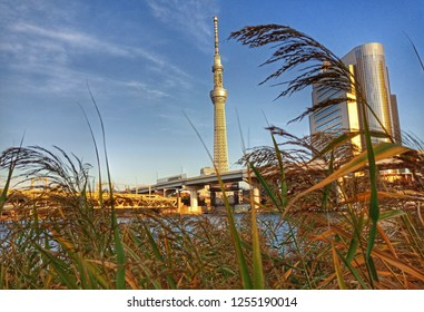 Toyko sky tree, Toyko, Japan,  December 04,2018 : Relaxing place at Sumida river with Toyko Sky Tree view.
