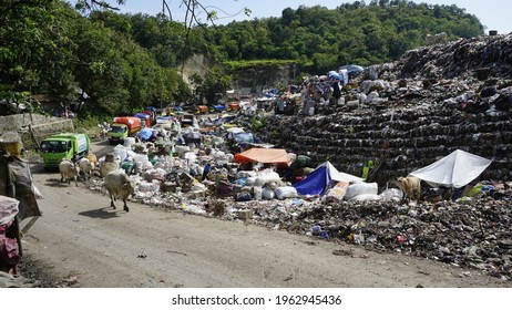 TPST Piyungan, Yogyakarta, Indonesia April 8th 2021 View on a landfill with pile of trash, some walking cows and trucks full of payload in line of queue for dumping the trash into the wasteland