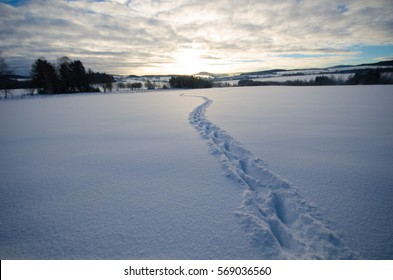 Traces of animals in snow in Saxony