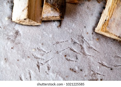 Traces of paws of the titmice on the snow. Nearby lie snow covered logs