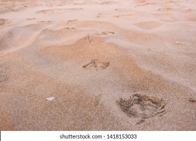 traces of seagulls on the sand of the beach