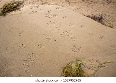 Traces of seagulls on sand beach in sunny day. Summer background with birds footprints and green seaweeds