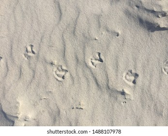 Traces of seagulls in the sand. Summer beach background with footprint seabird.