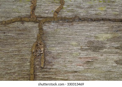Traces of  termite on the old wood surface