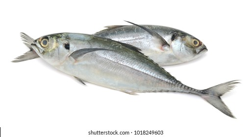 Trachurus fish isolated on white background