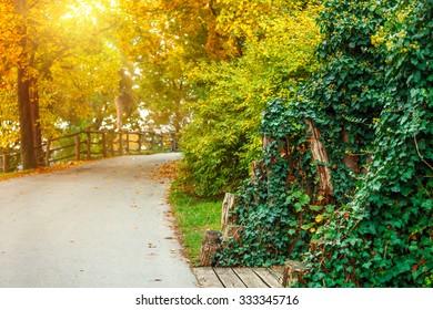 Track in autumnal park with sunny sunbeam landscape. Illustration
