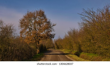 track with a distant jogger under a oak tree with dried leaves