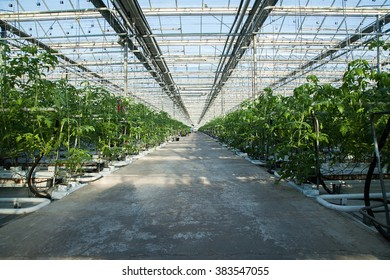 track inside big industrial greenhouse cultivation of cucumbers