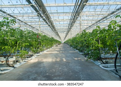 Track inside big industrial greenhouse perspective background