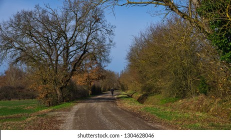 track with a jogger under a leafless oak tree