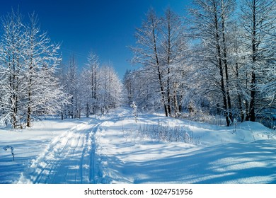 Track left by skis in beautiful wood on background blue sky in winter