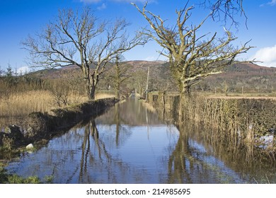 Track to RSPB Mersehead in Dumfries and Galloway flooded in March 2014 with reflected bare trees.