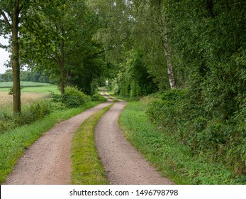 Track through forest and fields