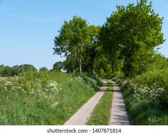 Track trough fields in spring, Schleswig-Holstein, Germany