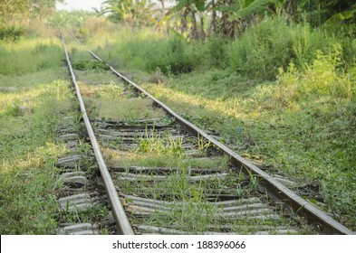 Tracks being eaten by jungle Abandoned railroad tracks in the Mexican Jungle