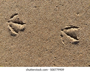 Tracks of a gull in sand