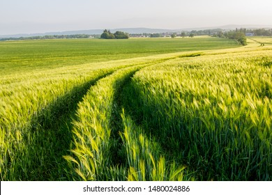 Tracks leading away through green field. Pure natural beauty, fresh green tones, spring time.