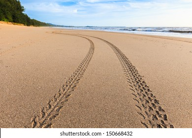 Tracks on the golden sand leading into the sea