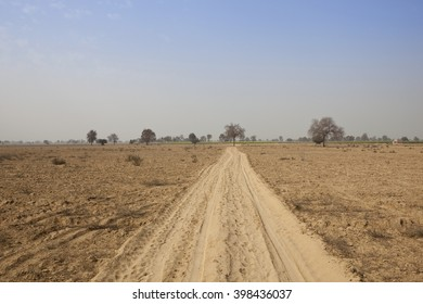 tracks in the sandy soil of Abohar in Rajasthan, North India with trees and distant mustard fields under a blue sky in springtime