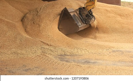 Tracktor scoop takin grain from the pile. Food factory warehouse concept.